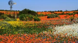 Namaquland Çölü