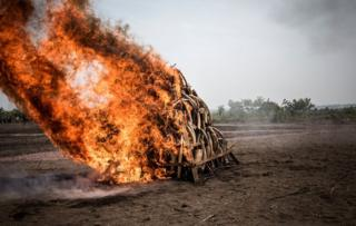 A pile of Ivory is seen being burned durning a ceremony attended by the president of the Democratic Republic of the Congo (DRC) who ignited one ton of ivory and pangolin scales on September 30, 2018 in Kinshasa