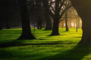 Sunshine through silhouetted trees