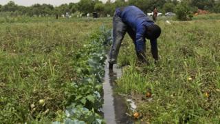 Kashi 1.6% cikin 100 kacal gwamnatin Najeriya ta ware wa harkar noma a cikin kasafin 2017