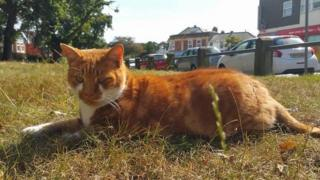 Southbourne cat