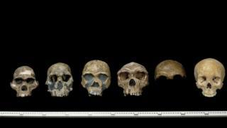 В определенное время на Земле обитало много видов протолюдей - гомининов
