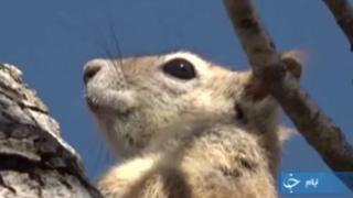 سنجاب ایرانی رو به انقراض: در بازار حیوانات خانگی
