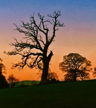 A silhouette of a tree at sunset