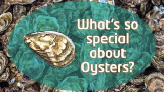What's so special about oysters?