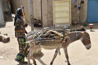 Harroonni kun dhalattoota Burundii miti