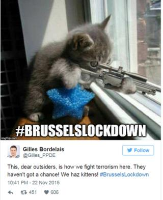 Gilles Bordelais ‏teets: This, dear outsiders, is how we fight terrorism here. They haven't got a chance! We haz kittens! #BrusselsLockdown