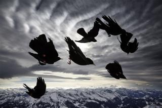 science Bird image by Alessandra Meniconzi
