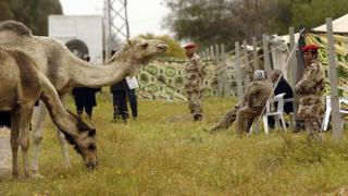 Верблюды у шатра Каддафи