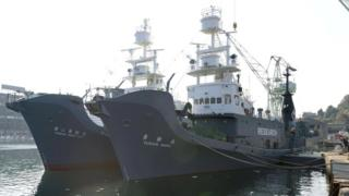 Japanese whaling vessels the Yushin Maru and Yushin Maru No.2, at a port in Shimonoseki, south-western Japan