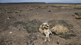 Uruzuba muri Afrika