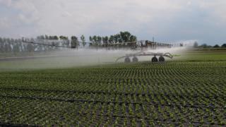 Lettuce irrigation