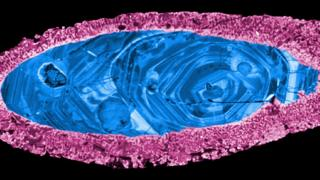 A zircon crystal used to date the Yarrabubba impact. The margin (pink) re-crystallised during impact, leaving the inner core (blue) intact.