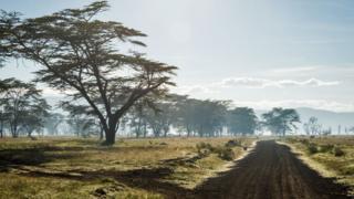 Estrada em Nakuru