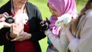 Guinea Pigs at Lucy Cavendish College