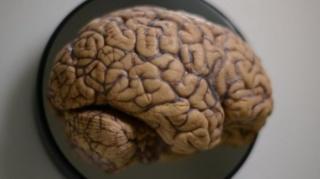 สมองของคนเราคือประดิษฐกรรมทางชีวภาพชิ้นสำคัญ