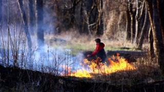 Пожежа в парку