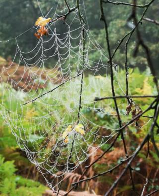 A spider web on a branch