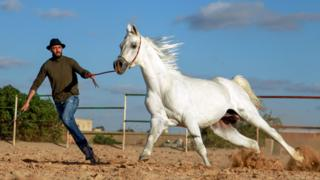 A horse trainer with a white horse in Benghazi, Libya - Tuesday 28 January 2020