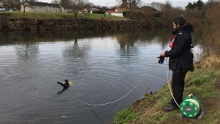 Diver in the River Taff