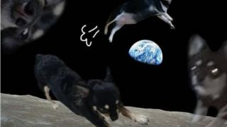 우주 배경에 반려견 사진을 합성한 '우주샷'