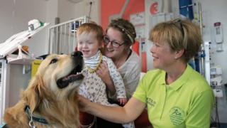 picture of Archie the dog with child at Southampton Children's hospital