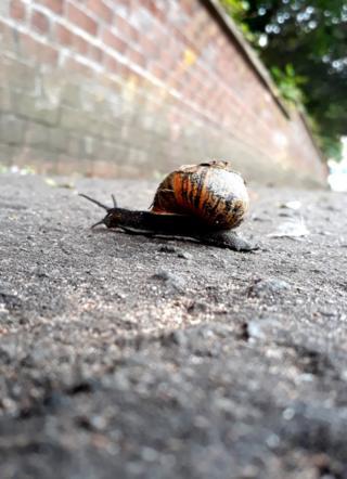 Dundee snail