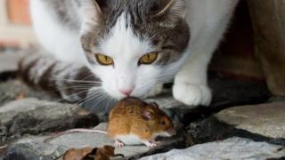 Мыши появились в домах людей раньше кошек