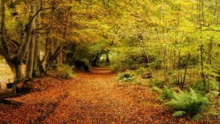 leaves near Traquair