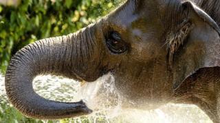 Au Liberia, des éléphants sèment la terreur dans le nord du Liberia.