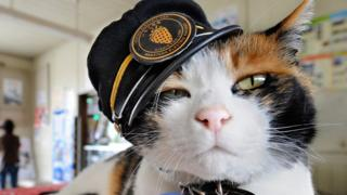 Tama the feline station master in Kinokawa, Japan