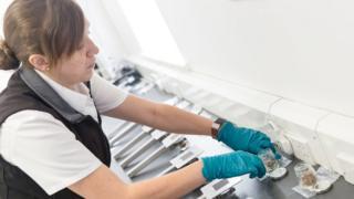 O estudo mostrou que os cachorros podem ser treinados para sentir cheiro de malária em meias de crianças infectadas. A imagem mostra pedaços das meias em um laboratório.