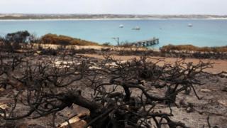 Australia fires: 'Apocalypse' comes to Kangaroo Island