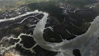 A file picture from 2013 showing creeks and vegetations devastated as a result of spills from oil thieves and Shell operational failures in Niger Delta