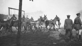 A mule race at Battery Sports Day in Römlinghoven in 1919