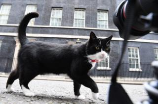 Palmerston, the Foreign Office cat, investigates media cameras in front of 10 Downing Street