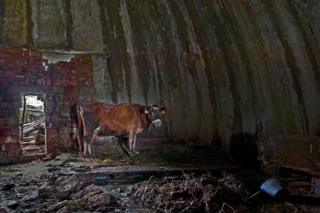Interior view of a bunker in Albania that is being used to house cattle