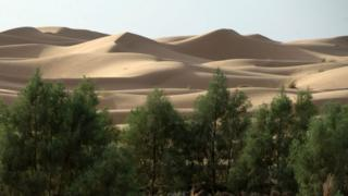 Trees growing near the Sahara desert