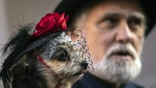 A dog dressed in a gothic-style hat