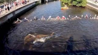 سلسلة بشرية تنقذ دلافين عالقة
