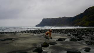 Corbie the puppy pictured here against the black sand at Talisker Bay.