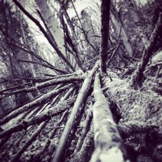 A fallen tree in the woods at Ashridge Estate, a National Trust property in Hertfordshire
