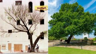 Two police officers under survivor tree in 1996 and how it appears today