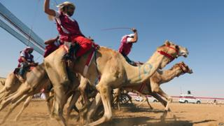 Camel-riders compete in a race on the outskirts of Abu Dhabi, in the UAE, in February 2014