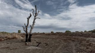 Rain clouds start to form in the sky above a drought-affected tree in New South Wales