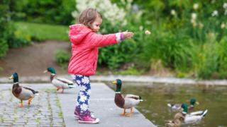 Feeding ducks bread: Viral sign sparks anger and confusion