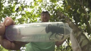 월리스 대왕벌 한 마리가 발견됐다