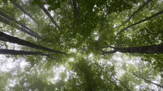 Copa de árboles vistas desde abajo