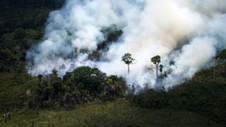 Selva amazónica en llamas