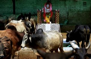 Indians revere cows